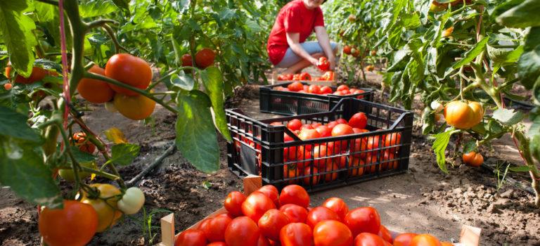Alianza entre seguros y sector agrícola busca duplicar la cobertura