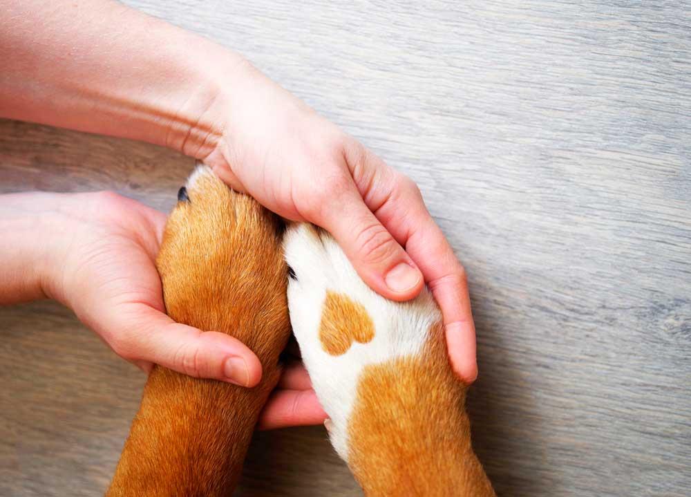 Seguros para mascotas resguardan la economía de los hogares