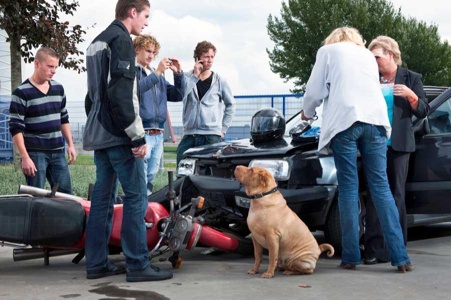 Jóvenes, las principales víctimas de accidentes viales